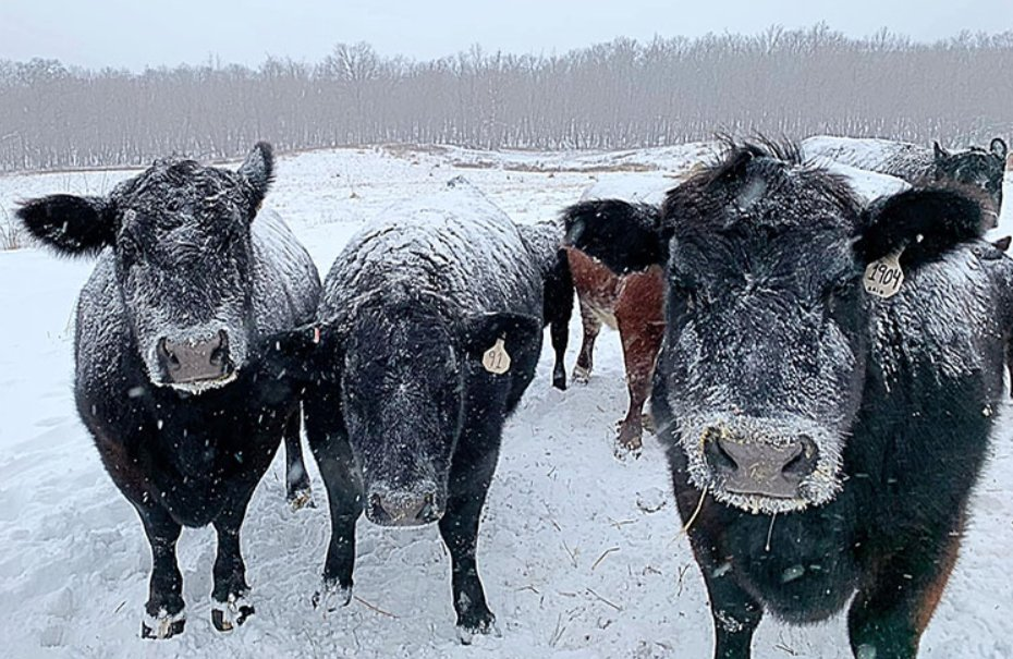 Winter storms create significant challenges and often result in catastrophic loss for agricultural producers, especially for those raising livestock, row crops, and vulnerable crops like citrus. .@USDA offers several programs to help with recovery: go.usa.gov/xsbeG