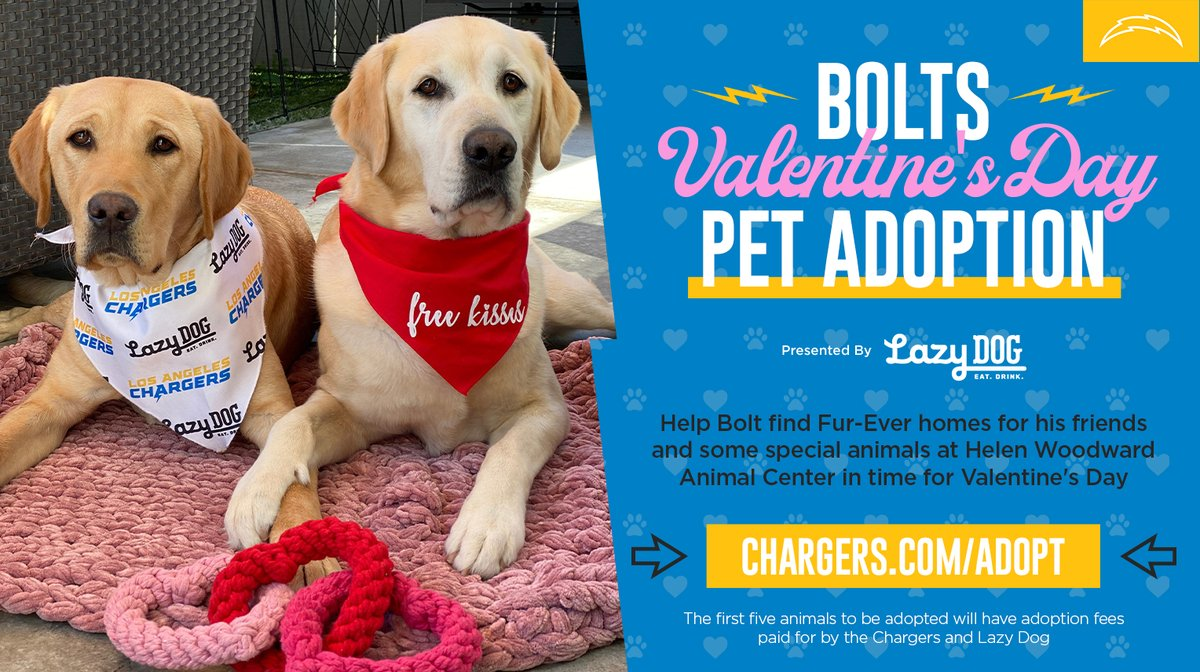 Are you the ulti-mutt pet lover?🐶  Don't miss the final days of our Valentine's adoptions ⚡  →