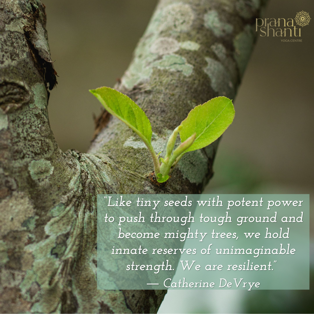 """""""Like tiny seeds with potent power to push through tough ground and become mighty trees, we hold innate reserves of unimaginable strength. We are resilient."""" ― Catherine DeVrye . . . . #MondayMantra #psiloveyoga #pranashanti #Pranashanti #PrananshantiYoga"""