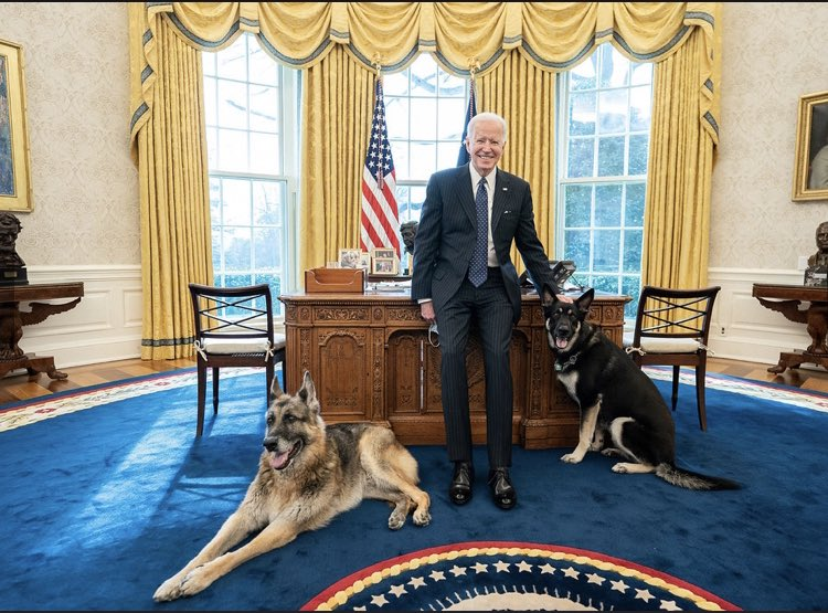 Replying to @KellyO: First Dogs Beat.  @POTUS Biden with Champ and Major in the Oval Office.  (📸 WH)