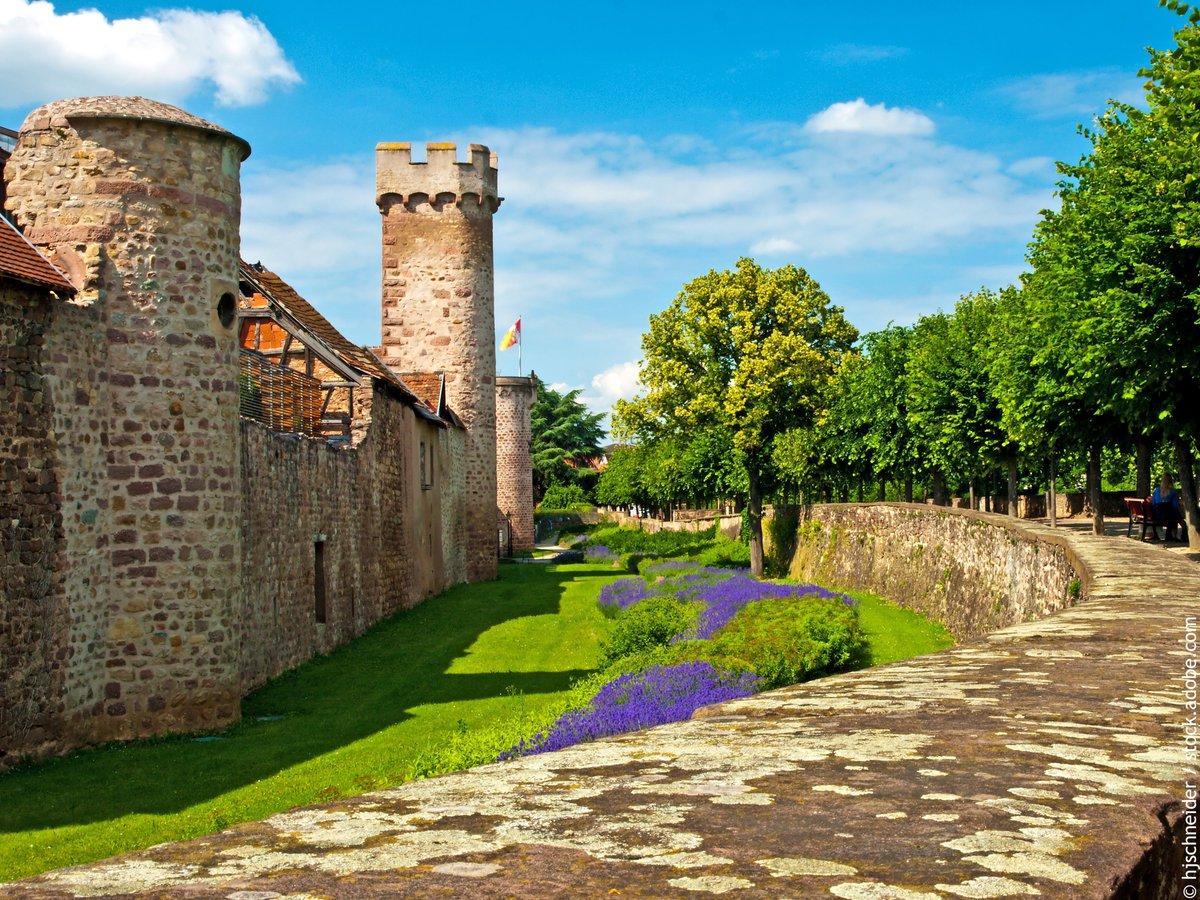 Petite balade le long des remparts d'Obernai, un des Plus Beaux Détours de France… est un véritable condensé d'Alsace ! 📸😍 https://t.co/VGcwWALhpZ #Alsace #VisitAlsace #DrinkAlsace https://t.co/8BwSYtzHHq