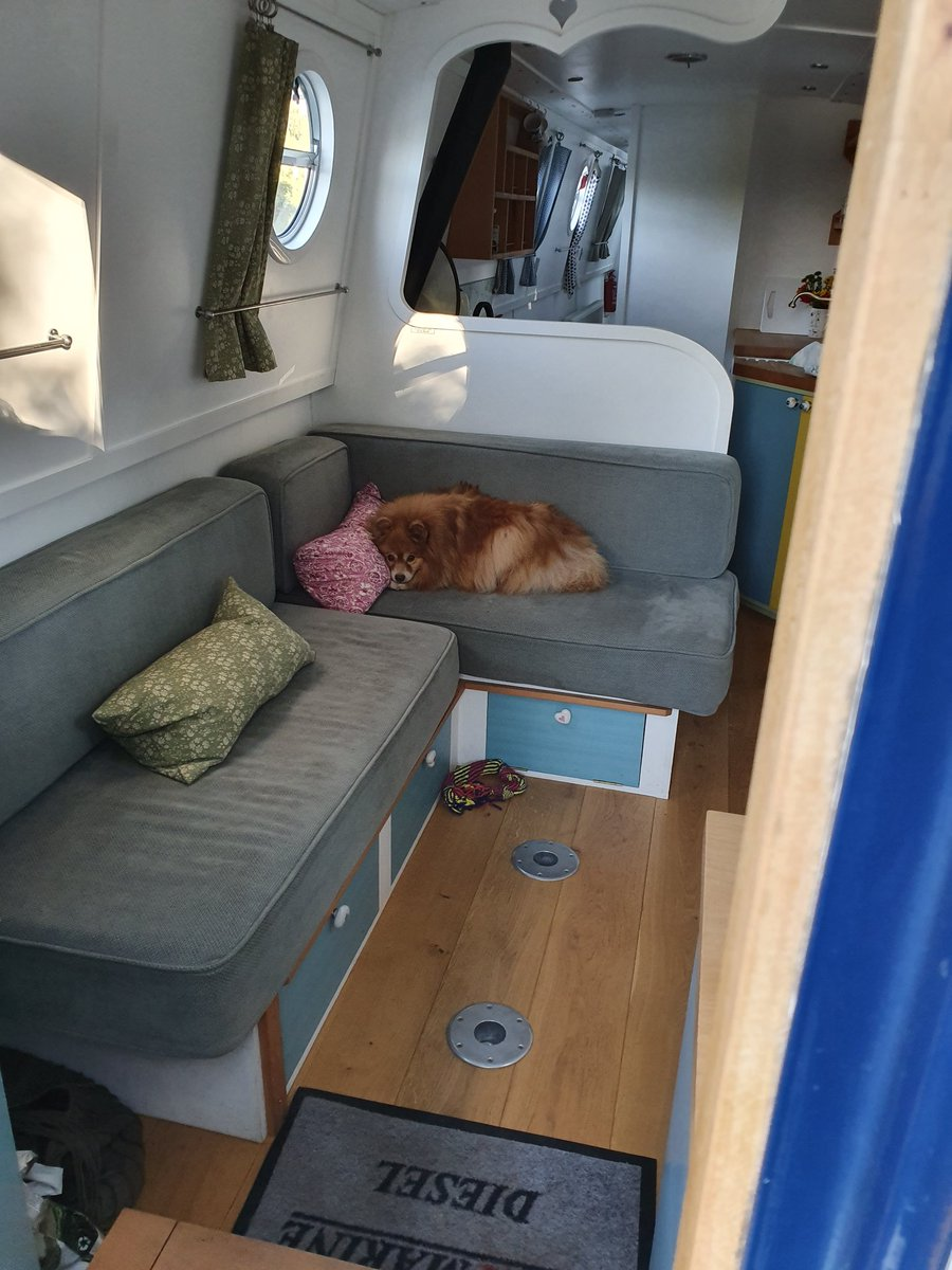 Day 6/7 dogs on narrowboats challenge.  Heidi after a hard days boating. https://t.co/GL2T96l9jx