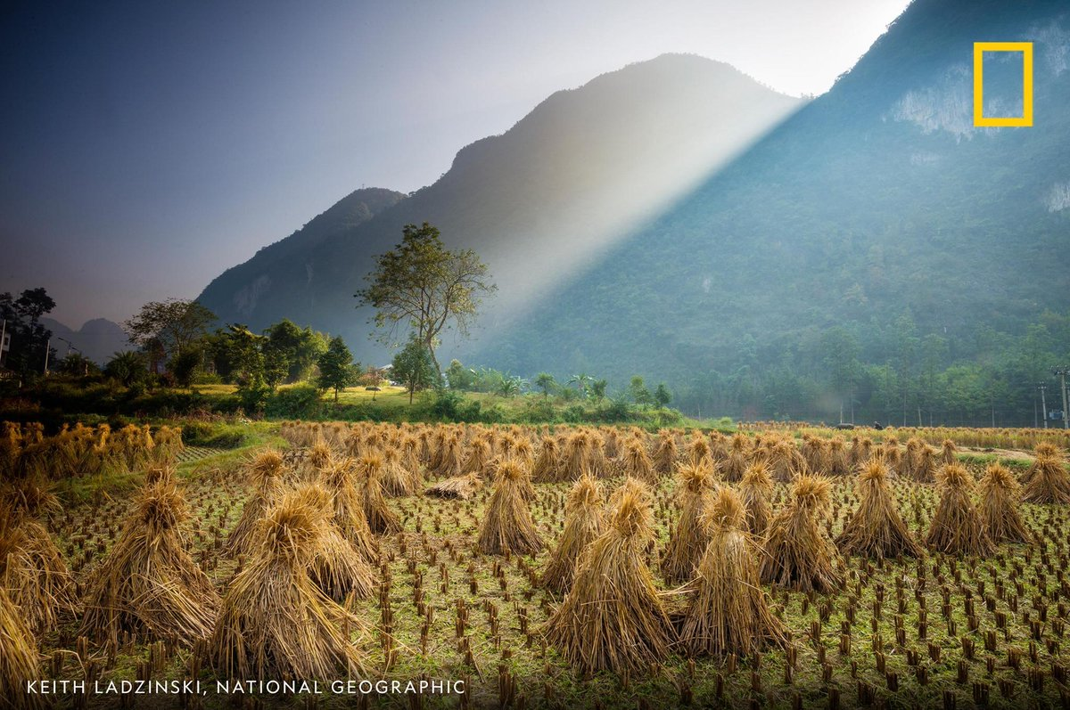 Rays of sunlight illuminate a lush rice field in China's Guizhou Province in this image by photographer Keith Ladzinski https://t.co/Kw8wAVfBxe