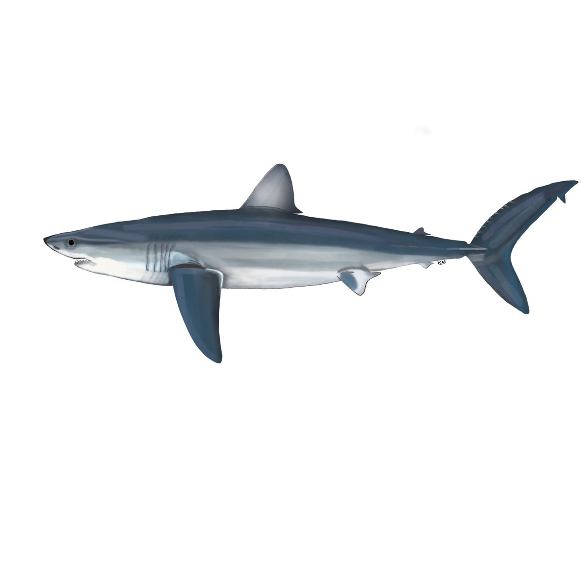 The #SharkLeague is eager to see South Africa's leadership on mako conservation extend to #ICCAT with support for Canada 🇨🇦/Senegal 🇸🇳 proposal of science-based int'l limits. Any guidance on when/if 🇿🇦 position for July meeting might be developed/announced? 🙏 #MakeOrBreak4Makos