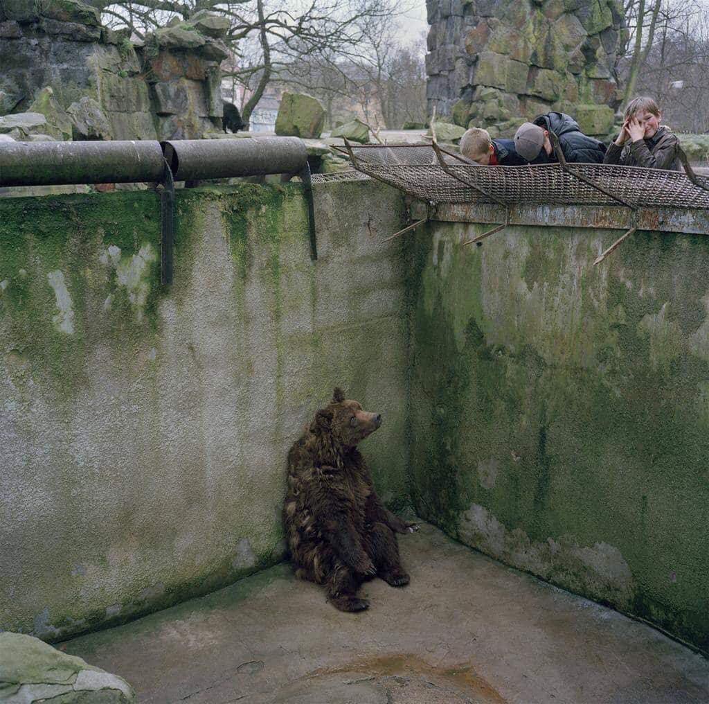تهنها شوێنێك كه ههموو زیندانییهكانی بێتاوانن، باخچهی ئاژهڵانه. A zoo is the only place where all the prisoners are innocent.