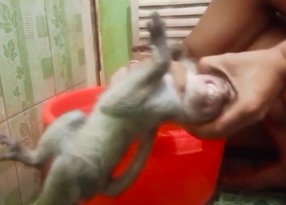 @YouTube @NaomiCampbell Saw this young monkey on YT being subjected to horrendous abuse last night, I & many others reported & yet it can still be watched. He was slapped hard across the face & flicked on the face & throttled under water. Today he was being swung from a chain & choking.