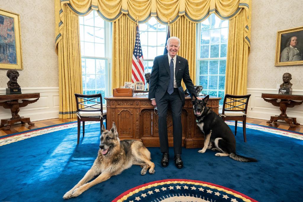 """الرئيس الأمريكى جو بايدن يستقبل """"كلابه"""" فى المكتب البيضاوى بايدن"""