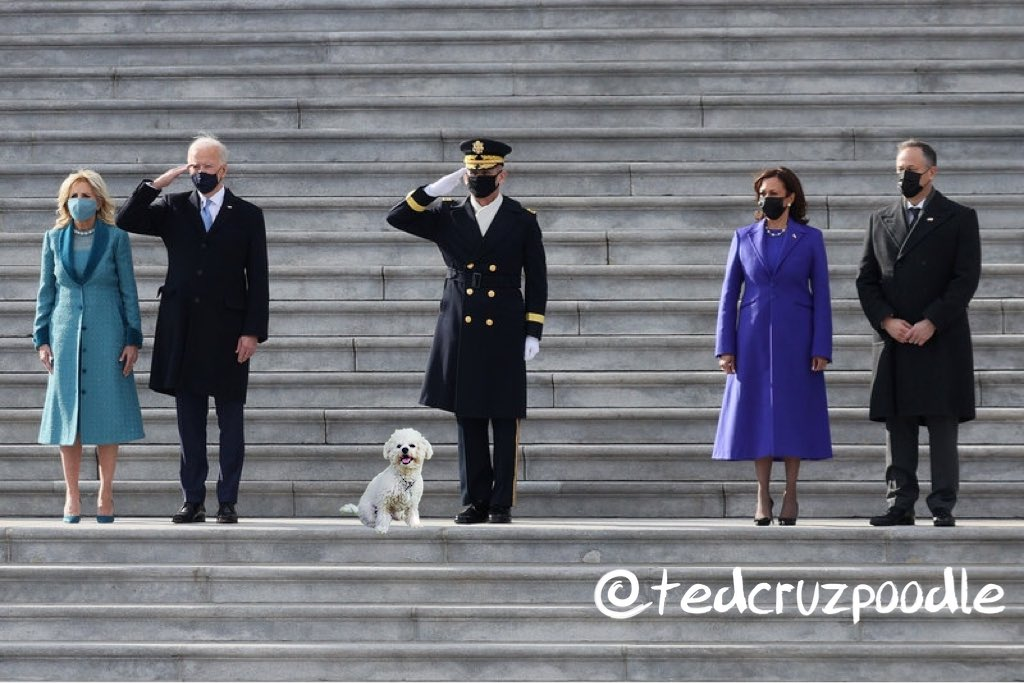 @SenTedCruz I figured out why dad went to Cancun without me. He found my photo album. Sorry, dad - I wanted to attend an inauguration in my lifetime & clearly you aren't my ticket. #InaugurationDay  #BidenHarris #TedCruzisADisgrace #TedFled  #CancunCruz  #tedcruzpoodle