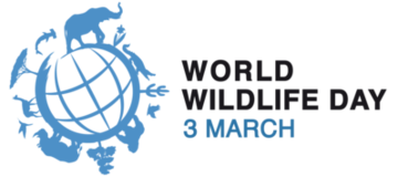 #DoOneThingToday to celebrate the importance of forests in honor of #WorldWildlifeDay! Of all the ways forests benefit us, which is your favorite?🌳⛺🌲 For more information, check out @WildlifeDay and their website: