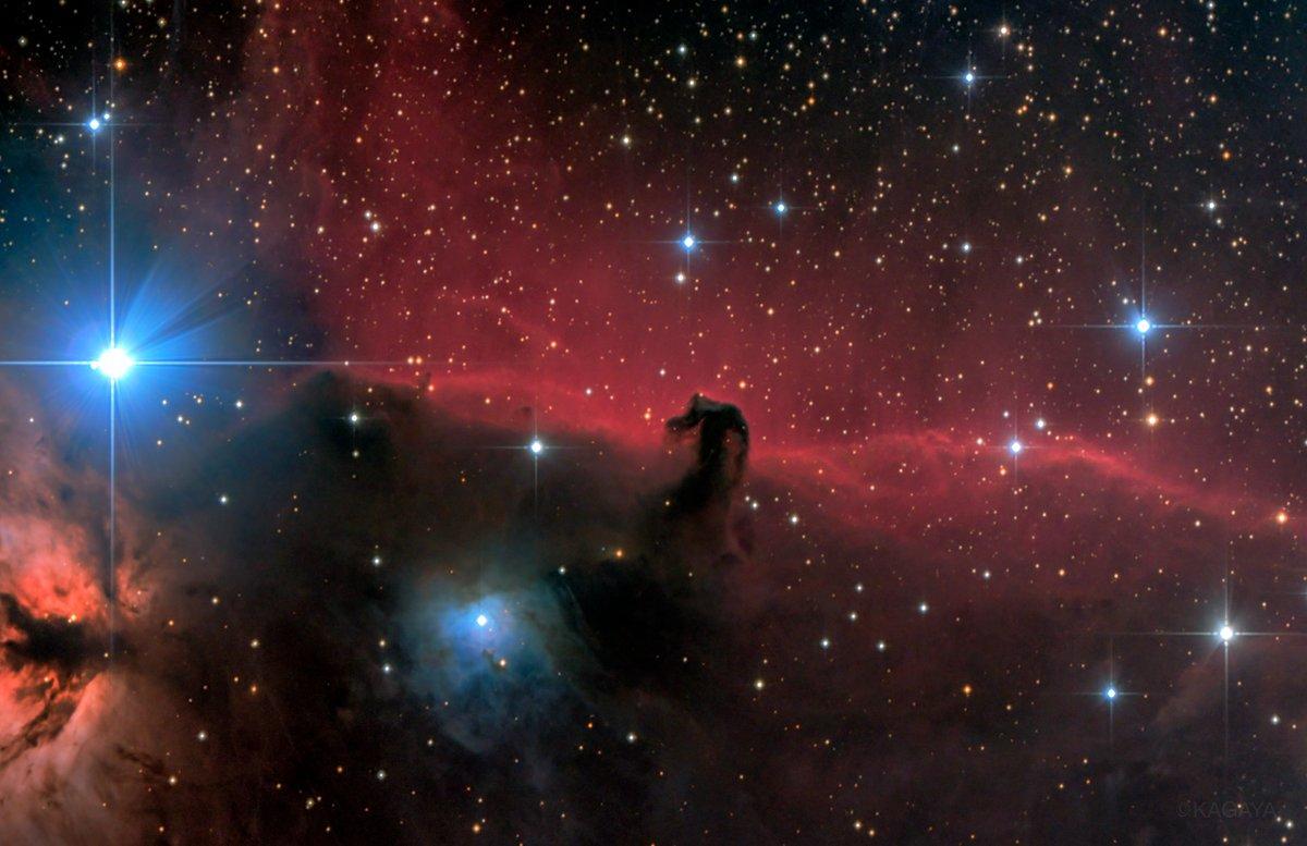 オリオン座の馬頭星雲。 赤く光る星雲の手前に、馬の頭の形の暗黒星雲がシルエットになって浮かび上がっています。距離約1500光年。 写真左の明るい星はオリオンの三ツ星の一つ。 天体用カメラで長時間光を集め、肉眼では見えない姿が写りました。(先日望遠鏡を使って撮影) 今週もお疲れさまでした。