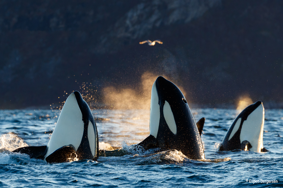 Pdf estimates of the abundance of cetaceans in the central north