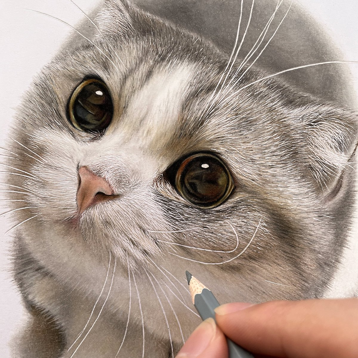色鉛筆でにゃんこ描きました〜!  もふもふ〜(っ ◜ω◝ c)