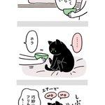 飼い主の苦労も猫には関係ない?愛猫の健康のためにお水を飲んでほしい絵日記!