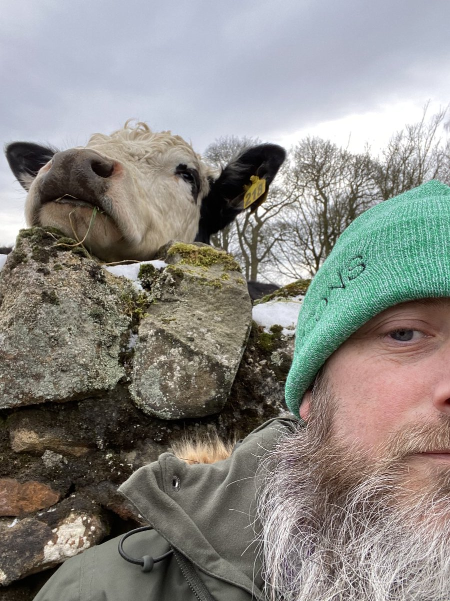 Today Leeds. Old tired man tried to get selfie with cow 🐮