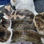 地震時の恐怖・猫たちだって怖かった。人と人の間に身を寄せている