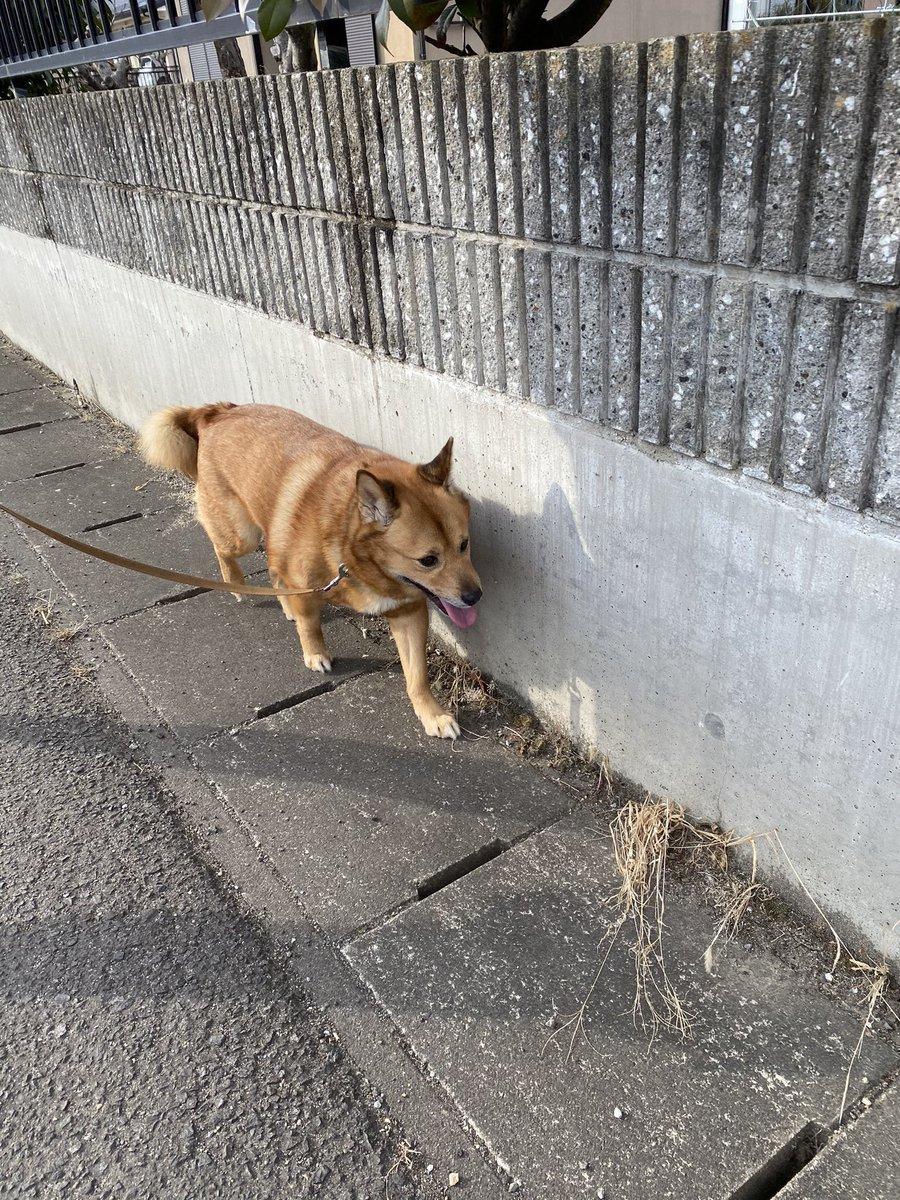 今脱走した犬を保護しました。 首輪やリードもあるので飼い主の方が困っていると思います。なにか情報がありましたらご連絡お願いします。 #拡散希望RTお願い致します #迷い犬