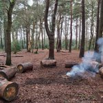 Mr Lee has been busy pushing these huge logs into the woods to create a permanent fire circle for Forest Schools. Now we have an even nicer area to enjoy the woods! #forestschools #outdoors #copthorneprep