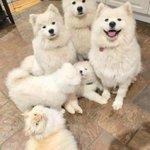 幸せそうな犬家族写真の中に、一匹の猫?!徐々にジワるWWW