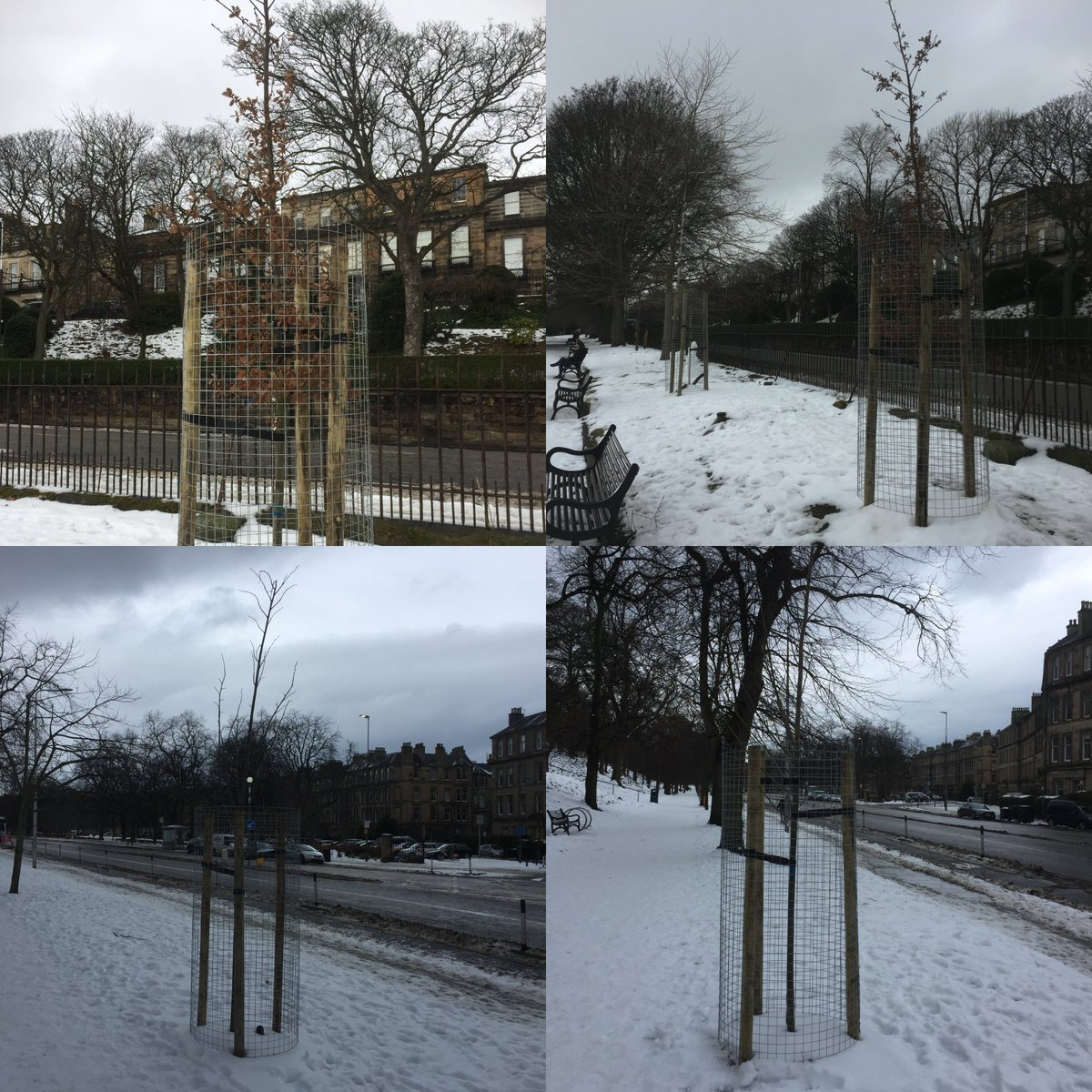 Thanks to your donations we have planted some lovely trees on Regent Road and London Road. Every donation helps make Edinburgh greener by planting more trees and by restoring the trees we already have. To find out more information visit https://t.co/wE9bLnCPHl @WoodlandTrust