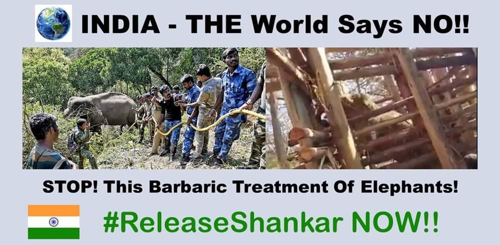 @srinivasanoffl @CMOTamilnadu @narendramodi @PMOIndia Imprisoning a wild elephant does NOT solve HEC. Find REAL solutions that work for both people and elephants and #ReleaseShankar #InYourHandsIndia