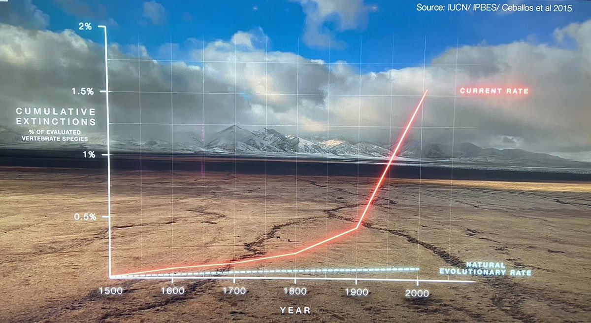 The sixth mass extinction is, unless we change, going to be the legacy of humanity. 1,000,000 species risk extinction because of our apathy & negligence.   The blue line is the baseline extinction rate (what should be happening). The red line is the extinction rate because of us.
