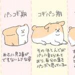 ほんとにこんな過程を経ていそう!食パンがコーギーに進化するまでを描いたイラスト!
