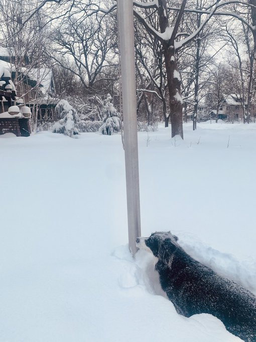 That time when your #BorderCollies dog lips get frozen to the #flagpole https://t.co/UMhFaJsUtm