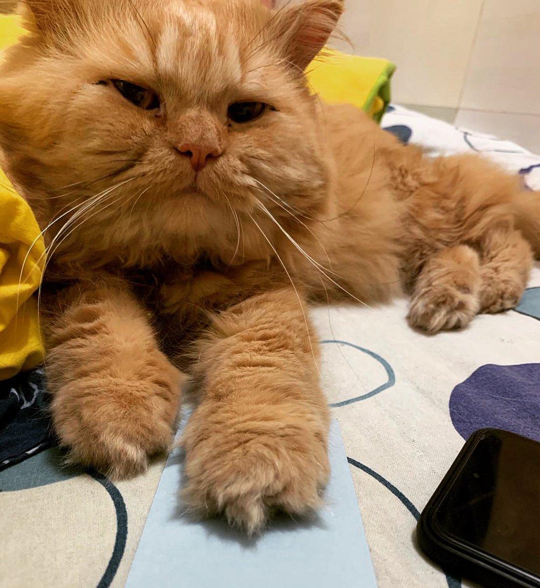 Ari boy 💕 #cats #CatsOfTwitter #CatsOnATrain #CatSweat #catstagram #catshuis #catshuisoverleg #catsjudgingkellyanne #catsjudgingmarjorie #catsnoirfriday #CatsOfTheQuarantine #catspanel