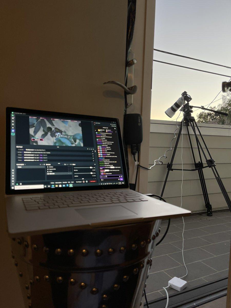 Live hummingbird cam setup.. 🤣