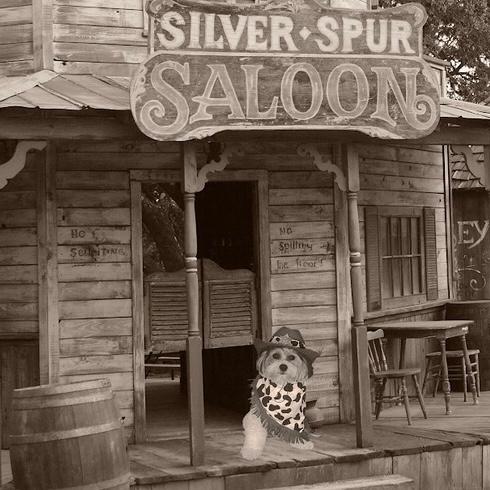 What does Chi call it when he wears his cowboy clothes?? 🤠  A. Ranch dressin'! . . . . . .  #thatdoggychi #shichonstagram #weeklyfluff #texasdogs #mydogist #pupper #dogsrule #mansbestfriend #mustlovedogs #cutestpupever #teddybeardog #dailybarker #adventuredog #dogdays #happydo