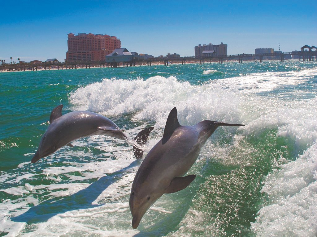 stpete-clearwater in
