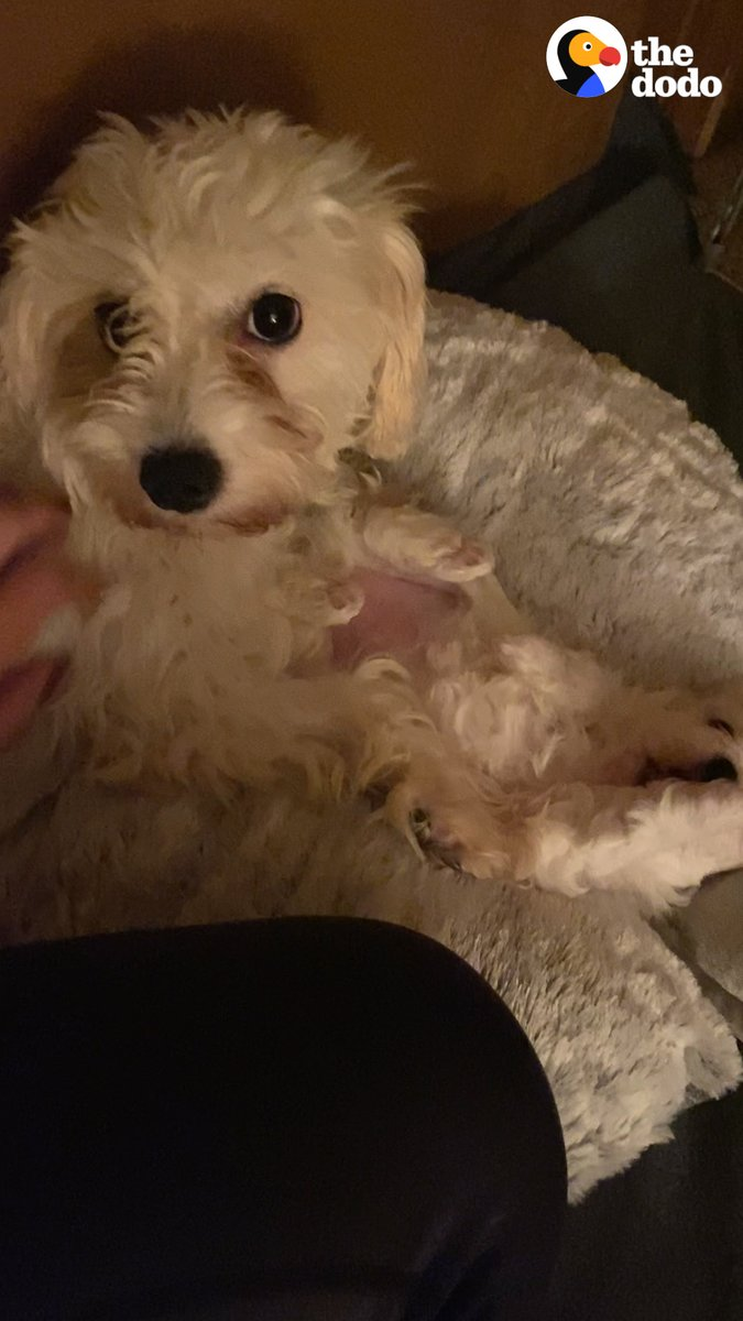 Couple decides to foster for the first time ... and gets a call for a pregnant, deaf mama dog ❤️