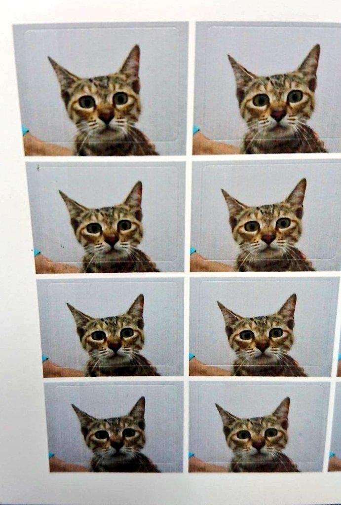 実家の猫の行きつけの動物病院は、予防接種するとサービスで写真撮ってくれて、 注射打たれる直前の怯えきった真顔(およそ指名手配犯)を16分割のシールにしてくれる