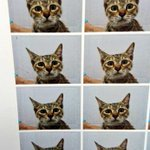 行きつけの動物病院で予防接種した際、写真を撮ってくれるサービスがあると話題に!怯え切った真顔にも注目!?