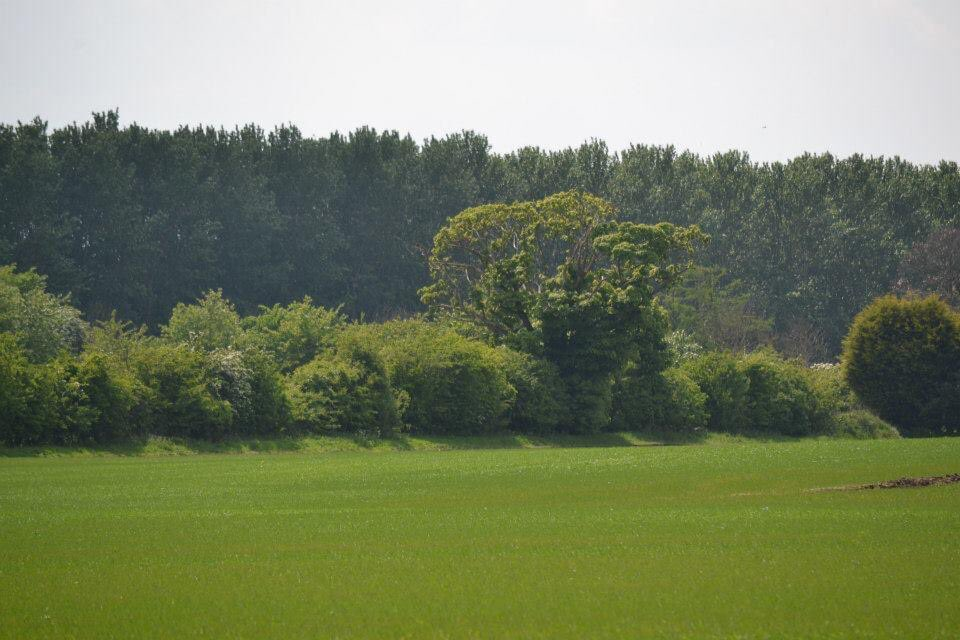 The @WoodlandTrust have objected to removal of this veteran tree on Melton Fields so @Wykeland @amazon can concrete over it and build a huge distribution centre. @East_Riding Trees & Landscapes & @YorksWildlife do you want to go against NPFF & @WoodlandTrust #MoneyOverWildlife