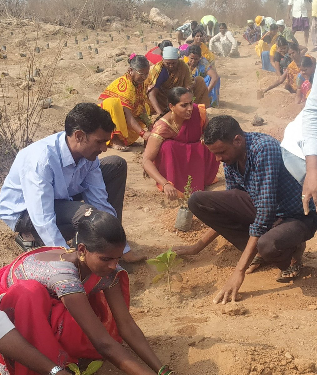 On CM KCR Sir Birthday My IKP-SERP Employees & Large No of SHG Members participated in #KotiVriksharchana #GreenIndiaChallenge  #HappyBirthdayKCRSIR  @TelanganaCMO @MPsantoshtrs @KTRTRS @RaoKavitha @DayakarRao2019  @VPRTRS @trspartyonline  @KavithakkaNews @KTR_News @krishanKTRS