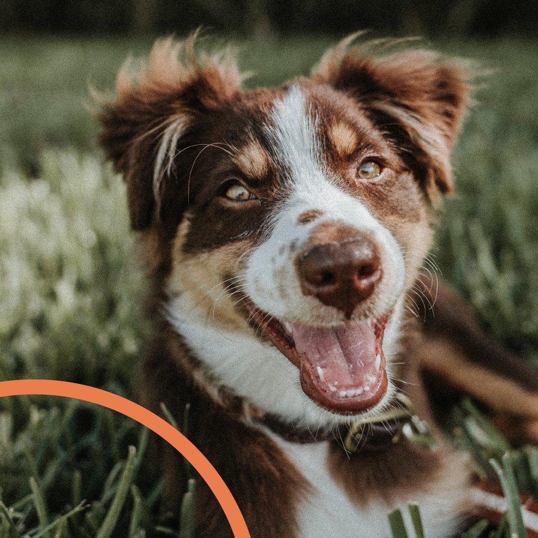 Looking for some Monday motivation? A smiley dog should do the trick.  #happymonday #mondaymotivation #weeklyfluff #dogoftheday