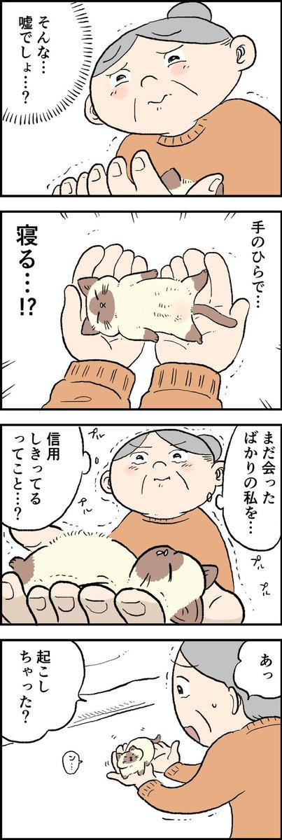 【8コママンガ】  知ってしまいました…子猫を…。  #猫のおふくちゃん