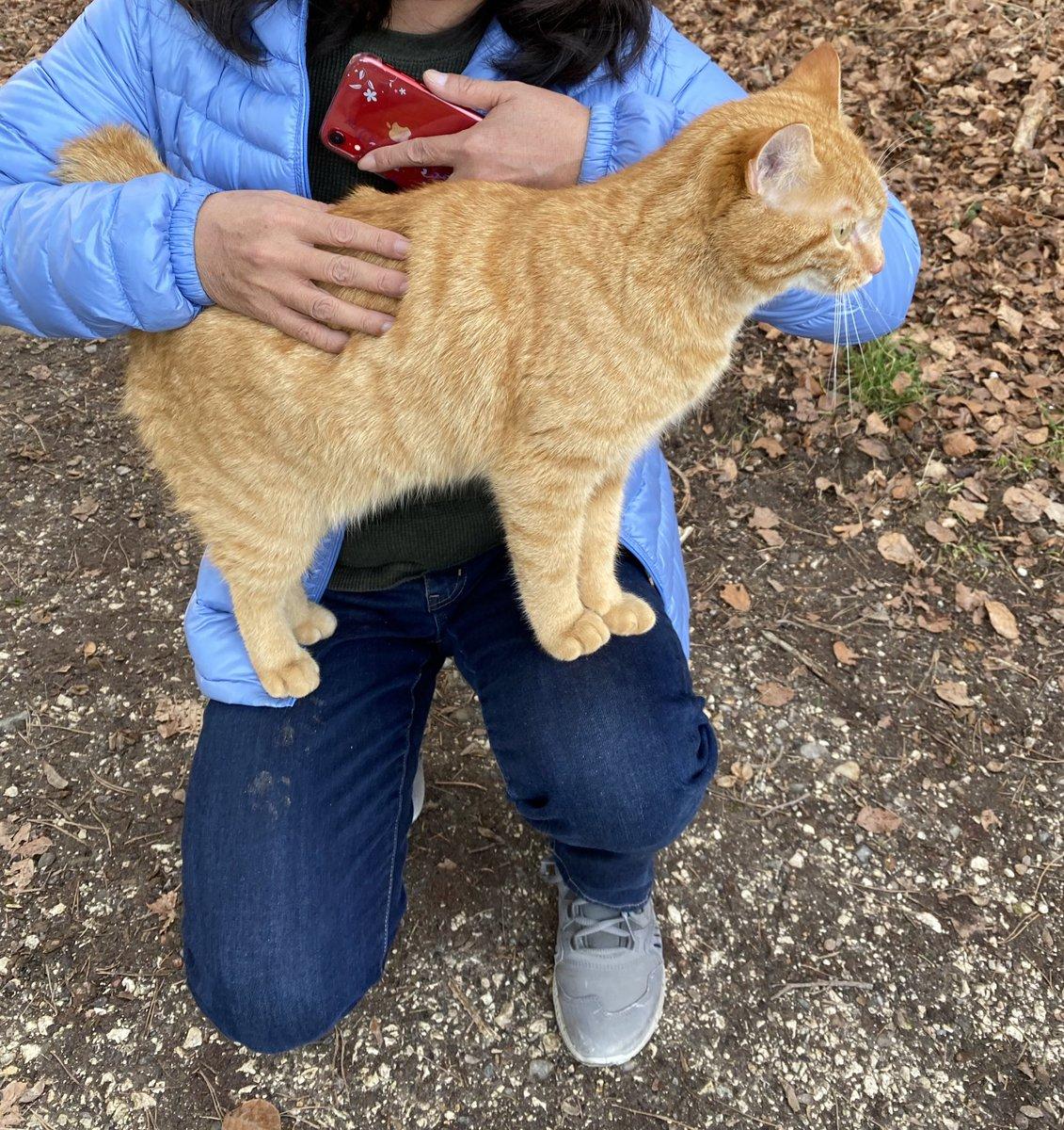 森にいたら、このネコ が一目散に走ってきて いきなり私のひざに乗った…  あんたどこの誰