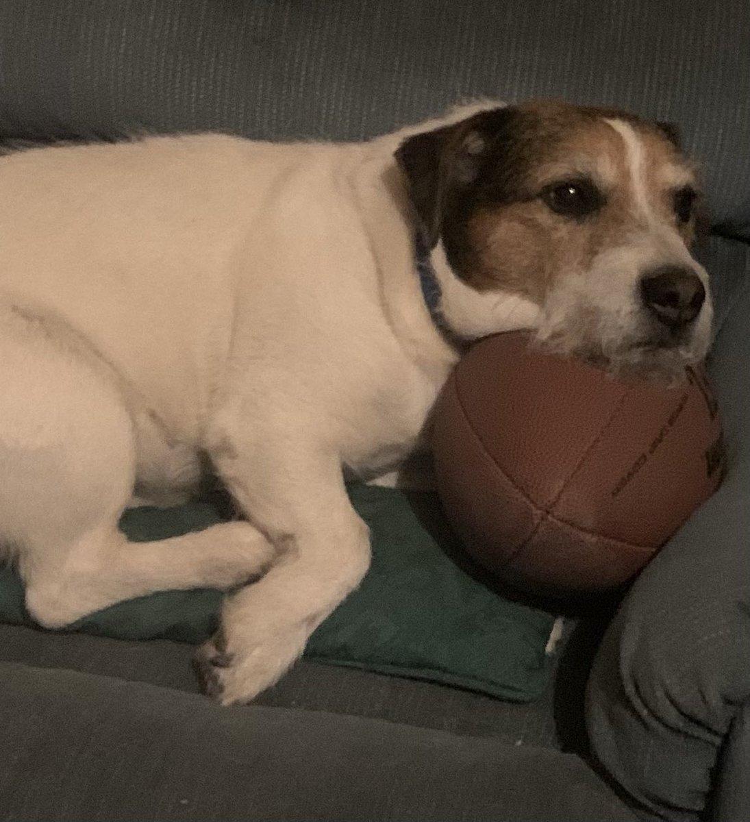 """@JoJoFromJerz Charlie says """"hi, wanna play catch""""?"""