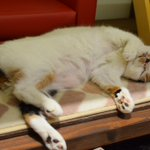 catcafecalicoのサムネイル画像