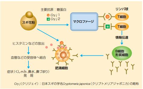 花粉 情報 の 今日