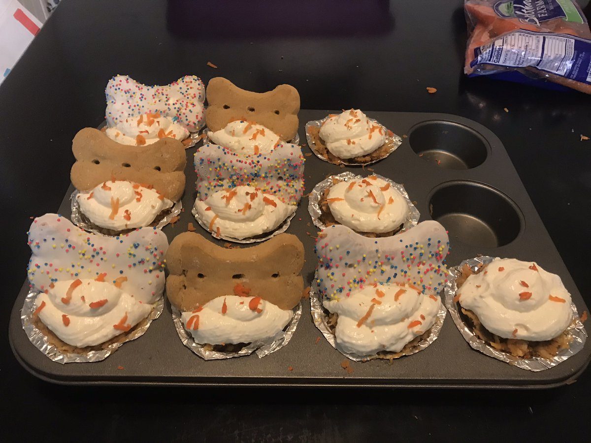 STOP NOBODY MOVE I NEED EVERYONE TO LOOK AT THESE PUPCAKES I MADE FOR MY DOGS BIRTHDAY PARTY TOMORROW