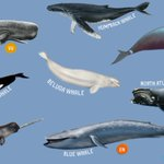 Image for the Tweet beginning: It's #WorldWhaleDay! These are some