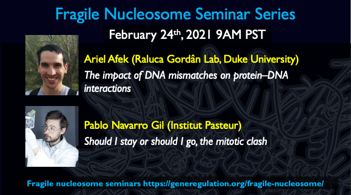 Our next #FragileNucleosome seminar [24 Feb, 9am PST] is devoted to transcription factor binding - with a talk on TF recognition of DNA mismatches by @Afek7Afek and a talk on #TFbinding in mitosis by @pablonavarroLAB. Don't miss it!