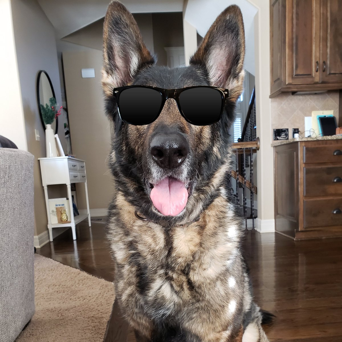 Don't let the sunglasses fool you. We see you @BTPLondon. #NationalLoveYourPetDay