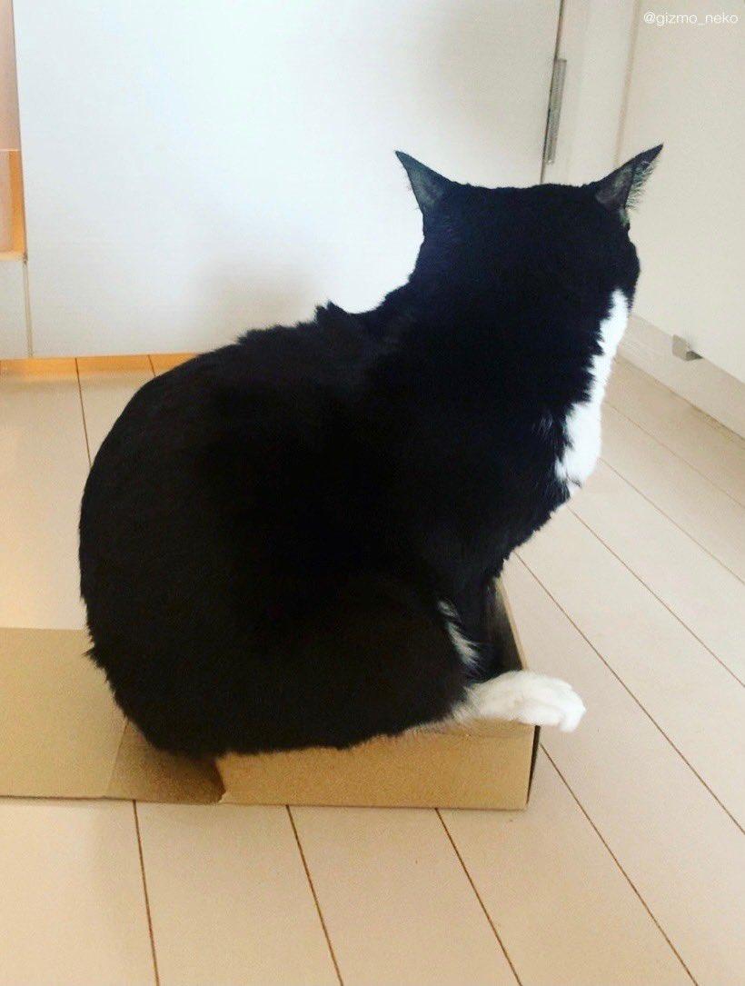 どんなにはみ出そうとも そこに箱がある限り