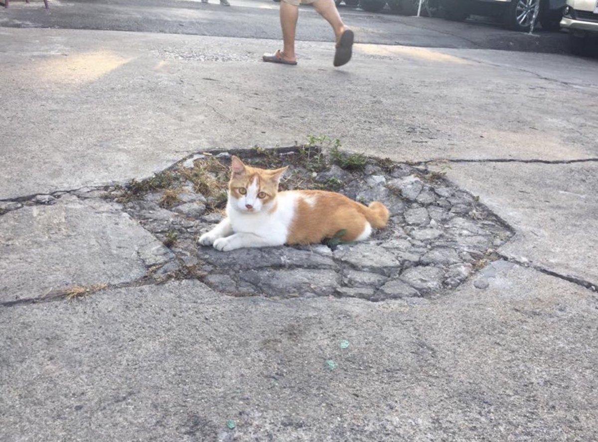 「敵に殴られた犬と身体を重くされた猫」の表現がピッタリな画像w