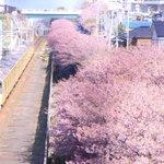 カメラで桜と電車を撮ってみると?車掌がノリノリで写っていたwww