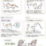 子猫を保護したときにやるべきことや、猫を飼うのに必要なもの、などなど!知っておきたい猫のあれこれ!